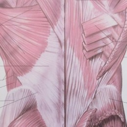 nezdrave-fasie-mozu-sposobit-bolest-chrbtice